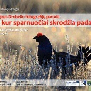 Ten_kur_sparnuociai_skrodzia_padange_INT